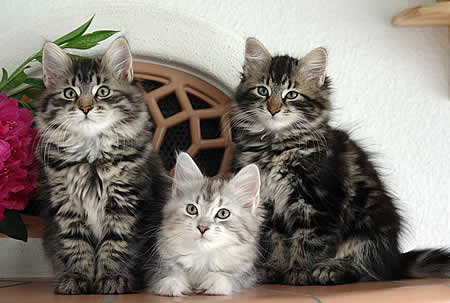 Katzen bild 3