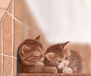 Katzen spenden einander Trost