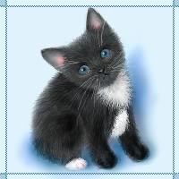 Schwarze Katze neigt ihr Haupt