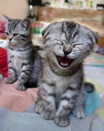 Katze mit lustiger Grimasse