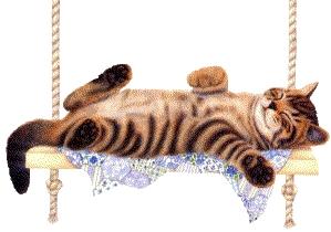 Katze entspannt sich auf einer Schaukel