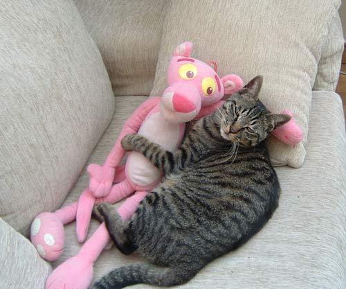 Katzen bild 6
