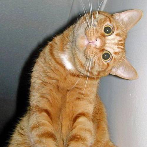 Katzen bild 8
