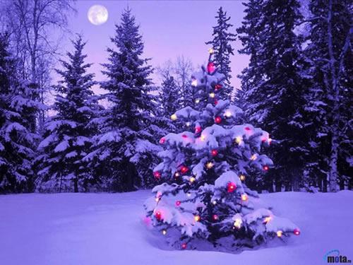 Weihnachtslandschaft bild 7