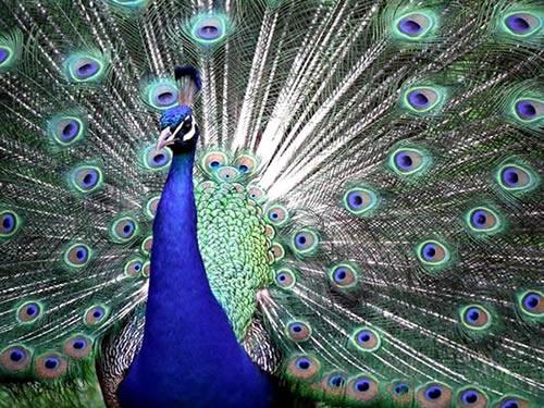 Vögel bild 4