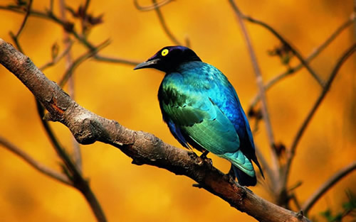 Vögel bild 9