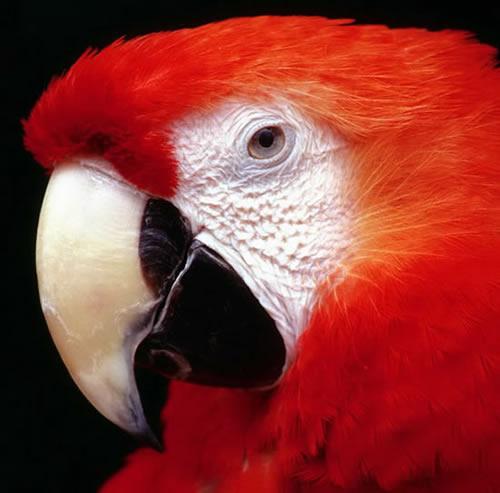 Vögel bild 10