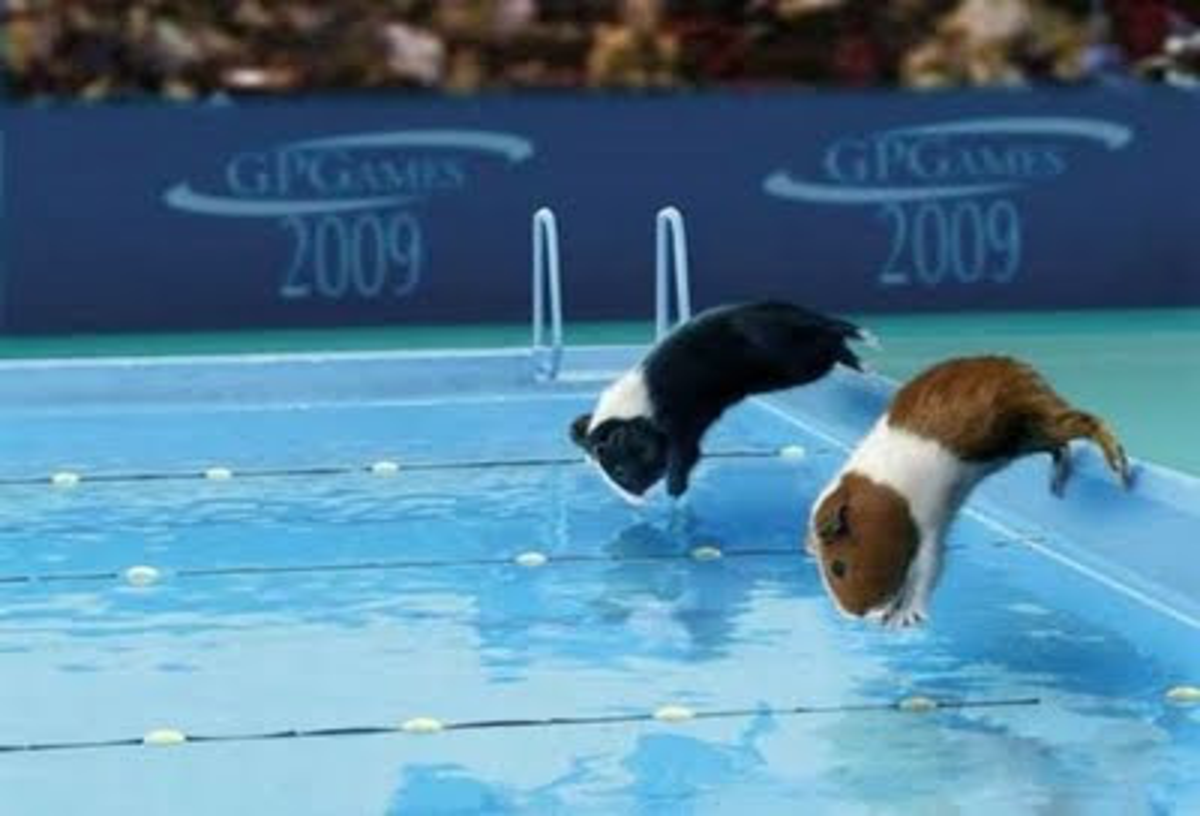 Lustige Olympiade bild 7