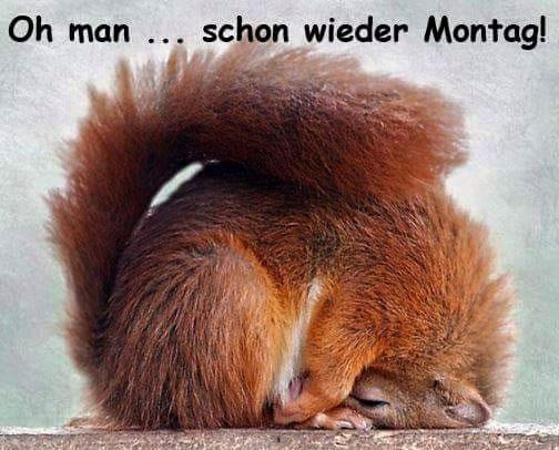Oh man... schon wieder Montag!