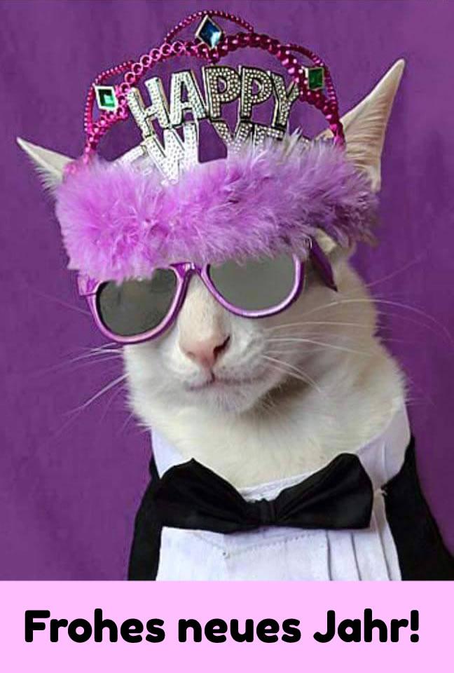Katze in lustigem Silvester-Outfit