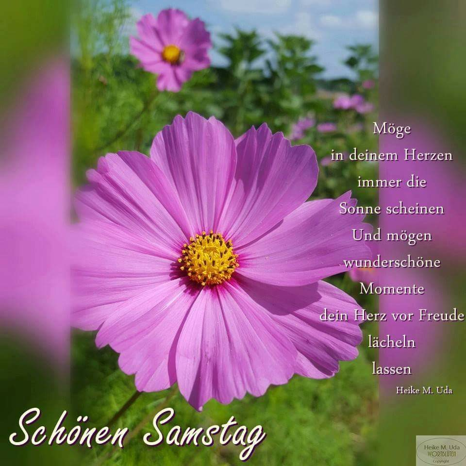 """""""Möge in deinem Herzen immer die Sonne scheinen und mögen wunderschöne Momente dein Herz vor Freude lächeln lassen""""..."""