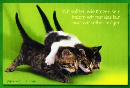 Wir sollten wie Katzen sein...