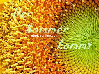 Den Sommer kommt