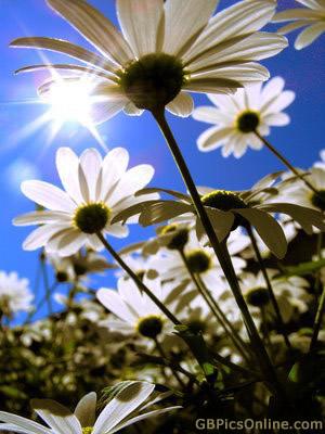 Sommer bild 7