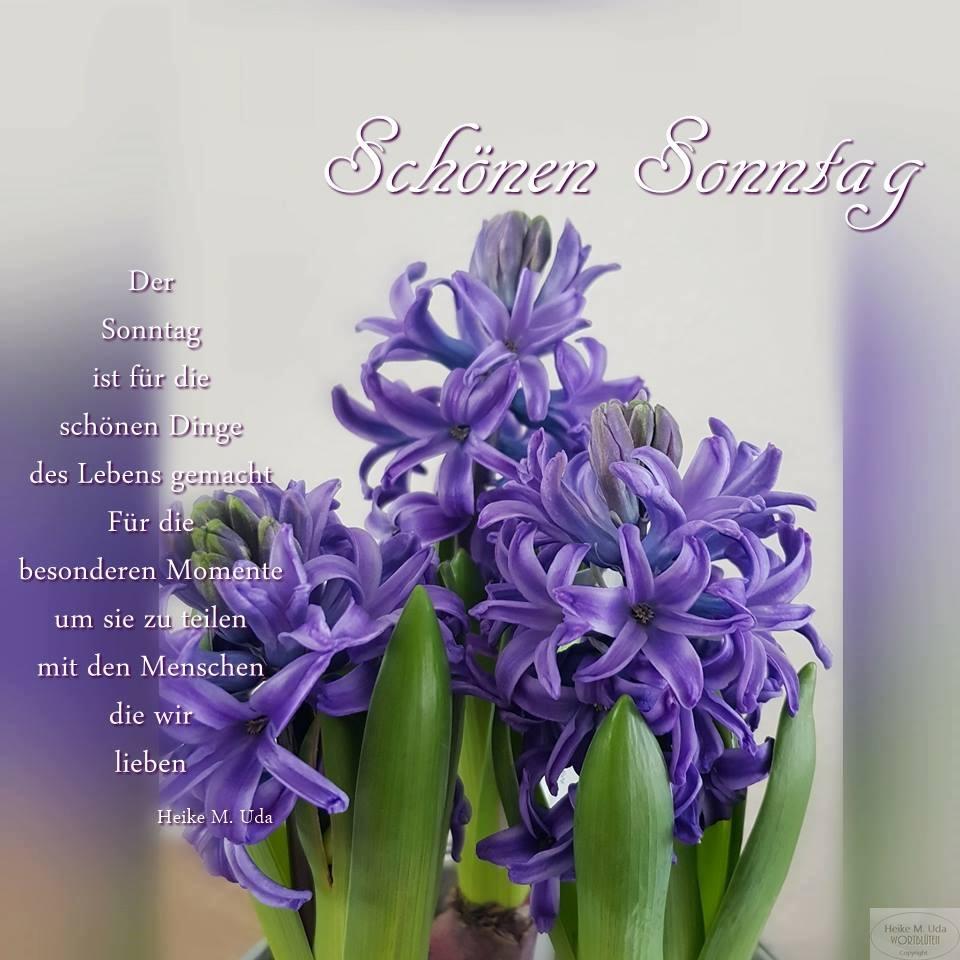 Schönen Sonntag...