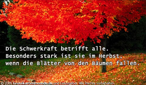 Herbst bild 9