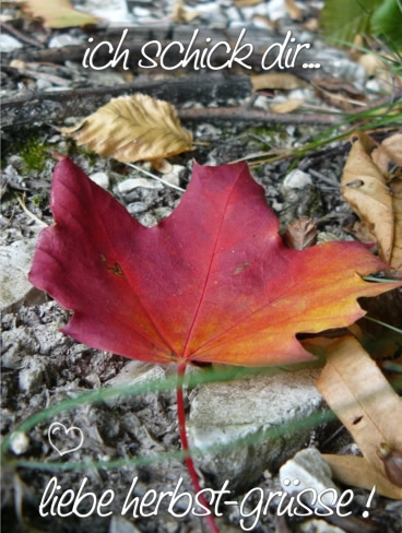 Herbst bild 6