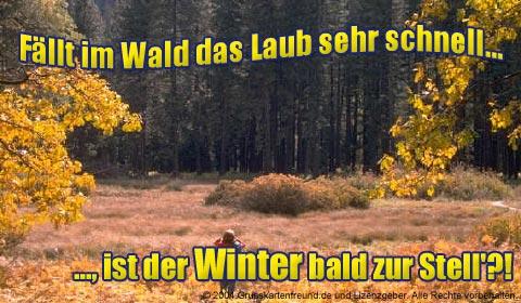 Fällt im Wald das Laub sehr schnell... ist der Winter bald zur Stell'?!