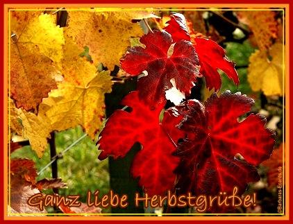 Herbst bild 4