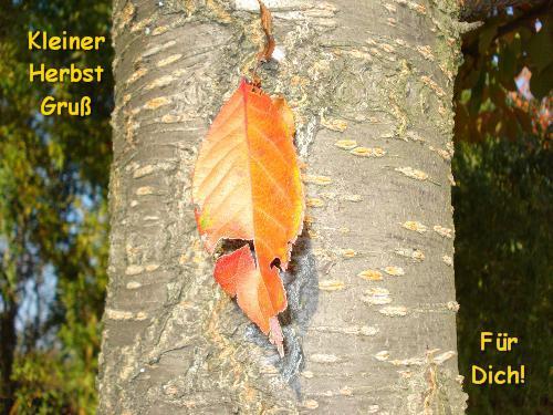 Kleiner Herbstgruß...