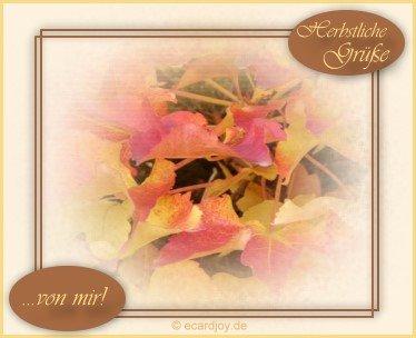 Herbst bild 7