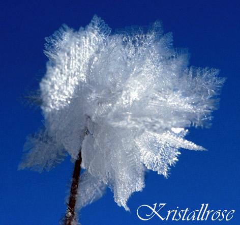 Kristallrose.
