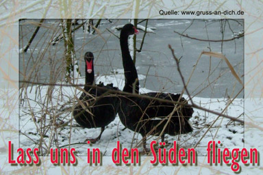 Winter bild 6