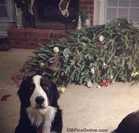 Lustiges zu Weihnachten bild 2