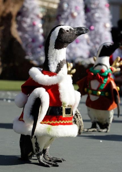 Pinguine in Weihnachtskleidung