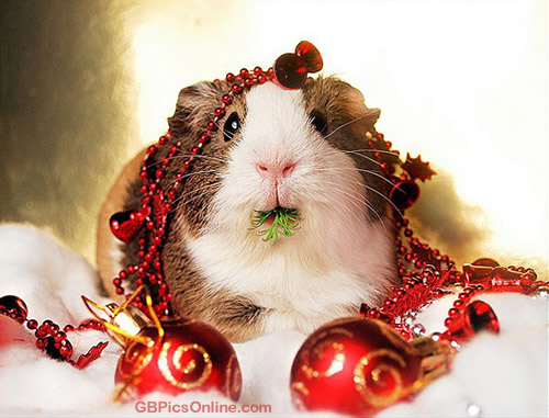 Weihnachtlich geschmückter Hamster