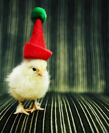 Lustiges zu Weihnachten bild #23003