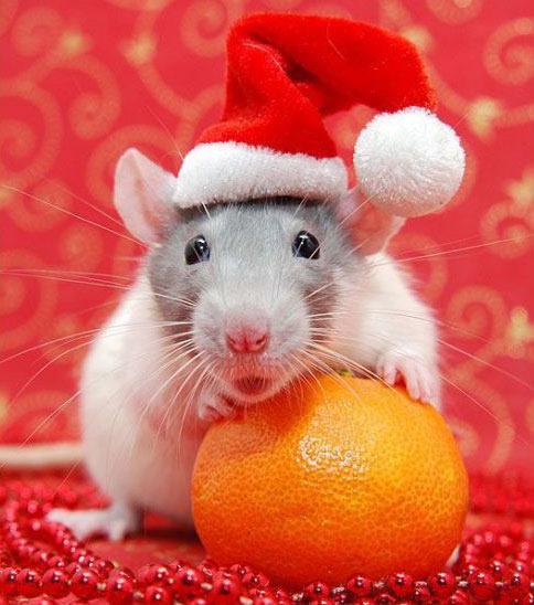 Lustiges zu Weihnachten bild 11