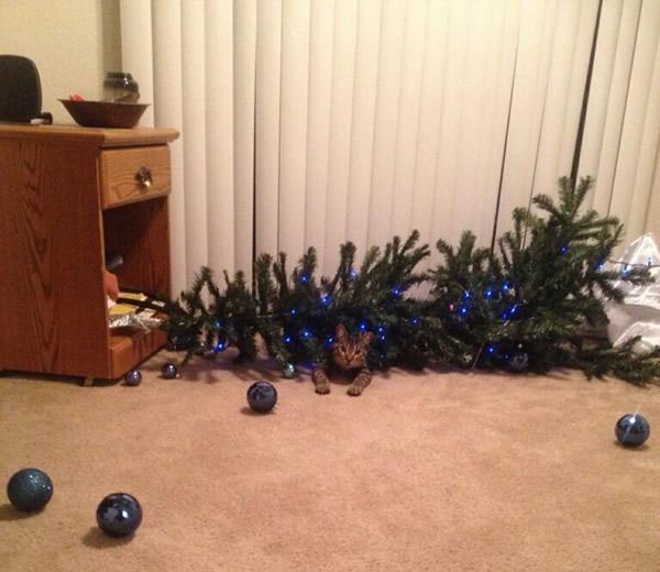 Lustiges zu Weihnachten bild 8