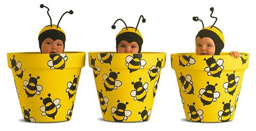 Bienenbabys in...