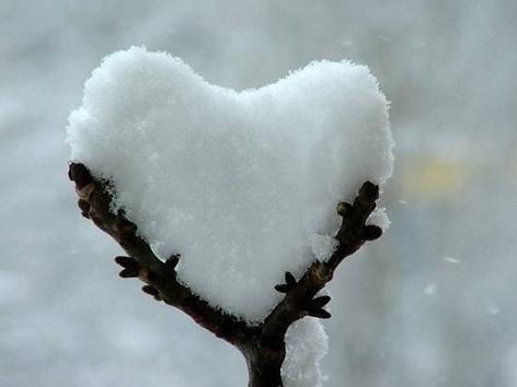 Ast hält ein Herz aus...