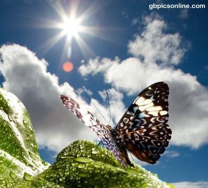 Schmetterlinge 4