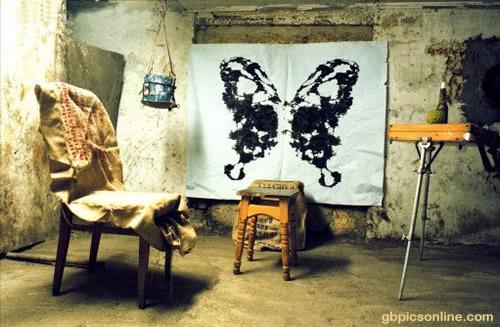 Schmetterlinge 6