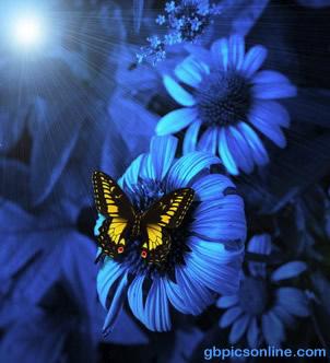 Schmetterlinge 7