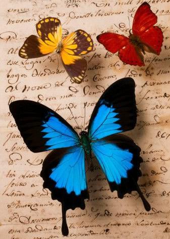 Schmetterlinge 8