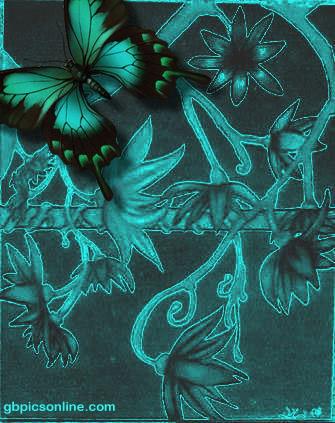 Schmetterlinge 1