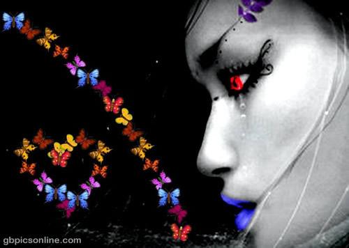 Schmetterlinge bild 5