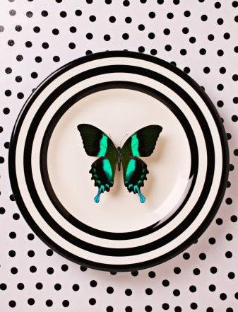 Schmetterlinge bild 9