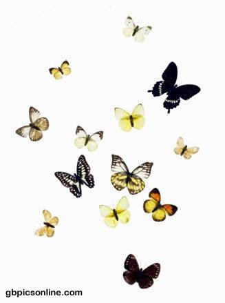 Schmetterlinge bild #7985