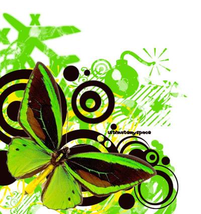 Schmetterlinge bild 6