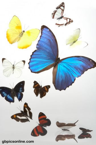 Schmetterlinge bild 2