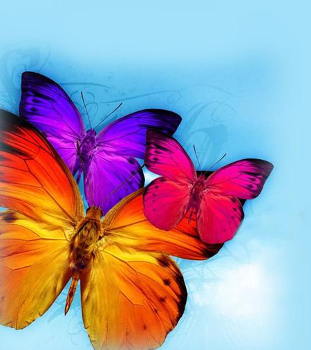 Schmetterlinge bild 12