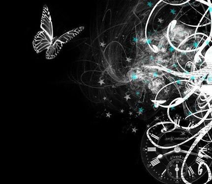 Schmetterlinge bild 7