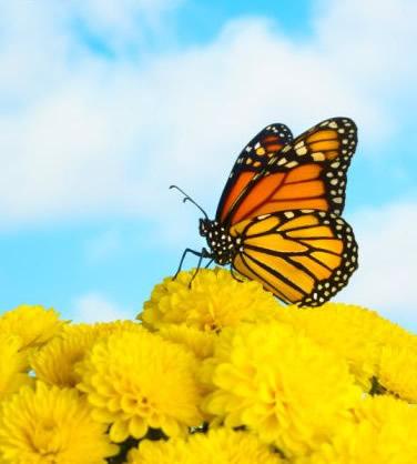 Schmetterlinge bild 13