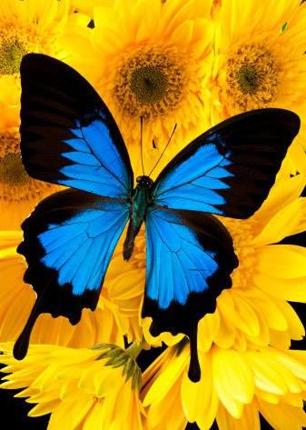 Schmetterlinge bild 14
