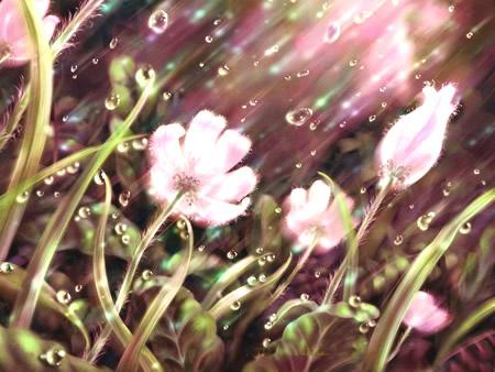 Blumen bild 6